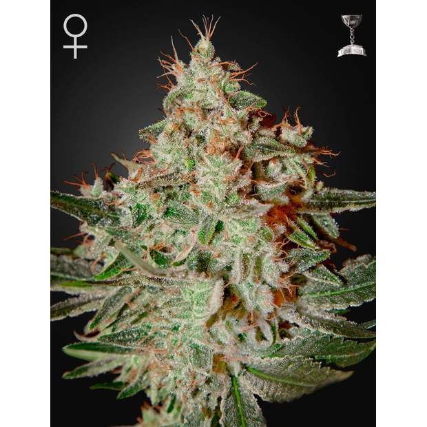 Green House Seeds Lemon Skunk 10 Stk feminisiert