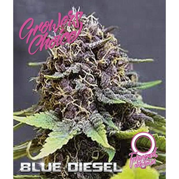 Growers Choice Blue Diesel Auto 5 Stk